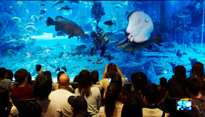 Visit_The_Famous_Busan_Sea_Life_Aquarium