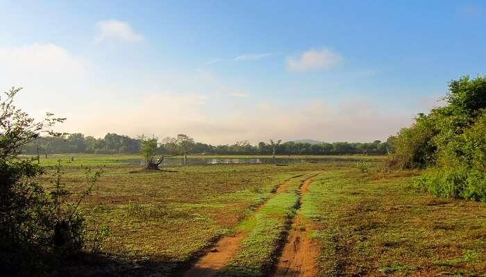 Wasgumawa National Park