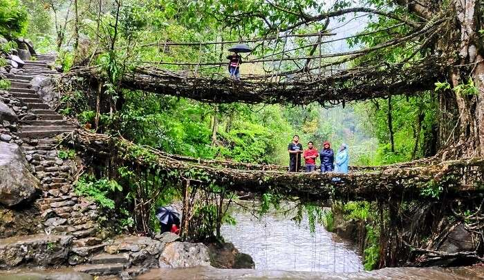 double decker root bridge