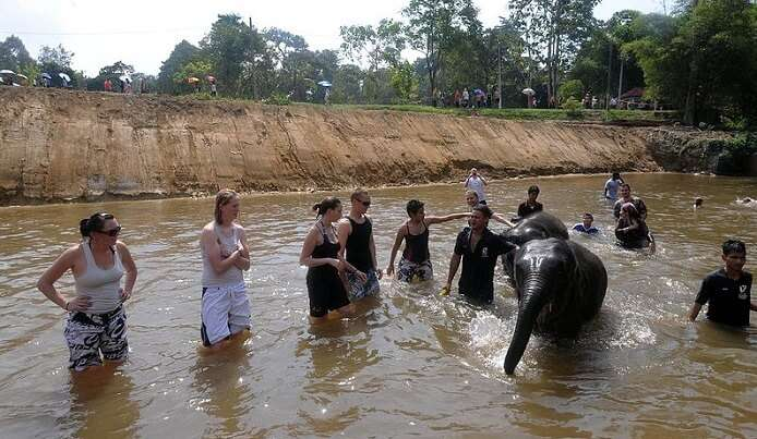 elephant conservation singapore