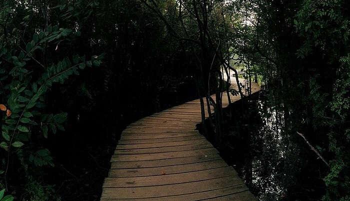 Beddagana Wetland Park