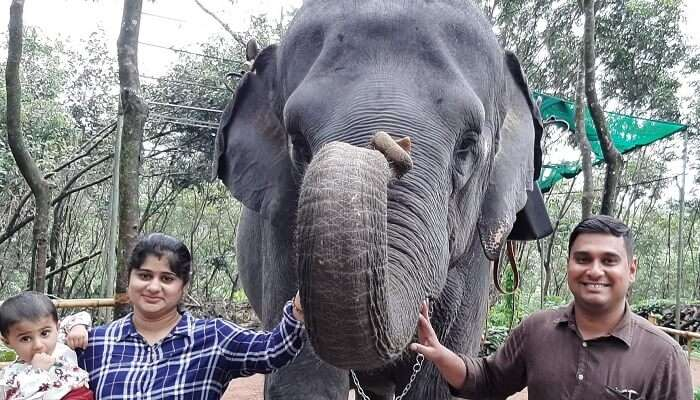 took an elephant ride in Munnar