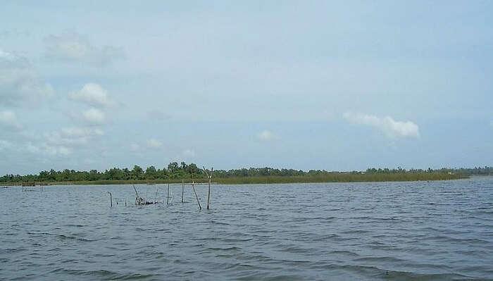 Bolgoda-Lake Sri lanka