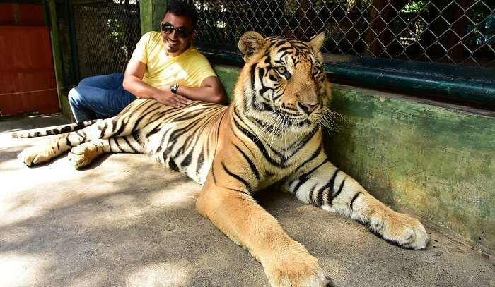 glad to touch the real tigers