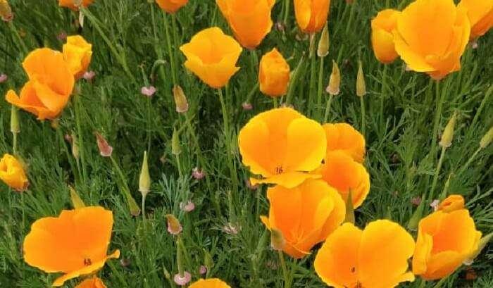 Phobjikha flowers valley
