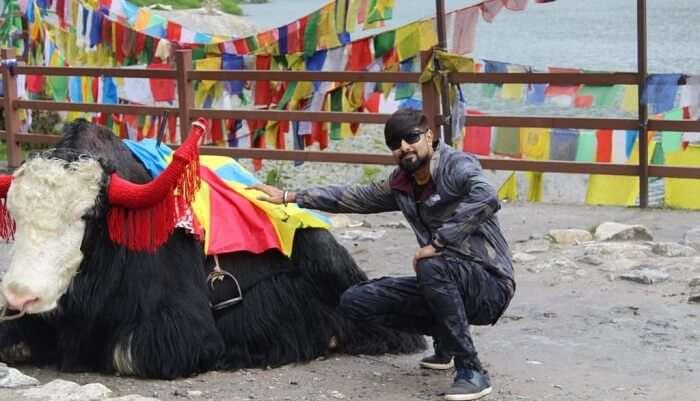 yak at the lake side