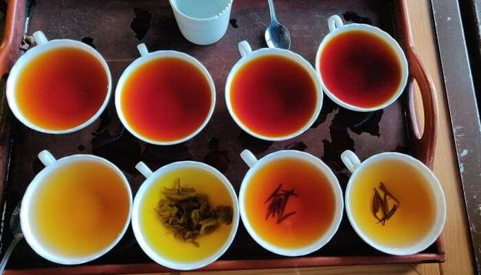 tasting tea of different flavours