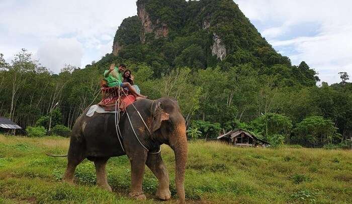 enjoyed the elephant ride