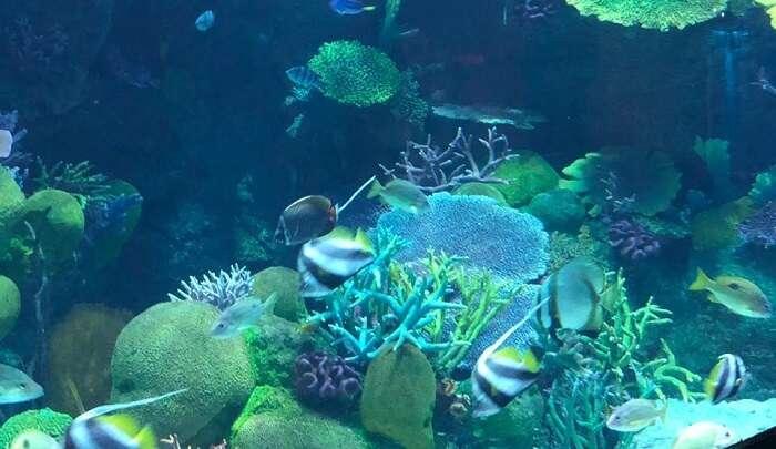 awe-inspiring marine life