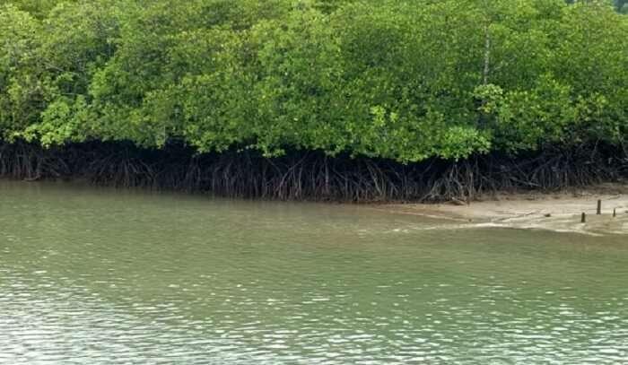 a remote island