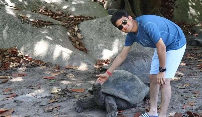 touching the turtel