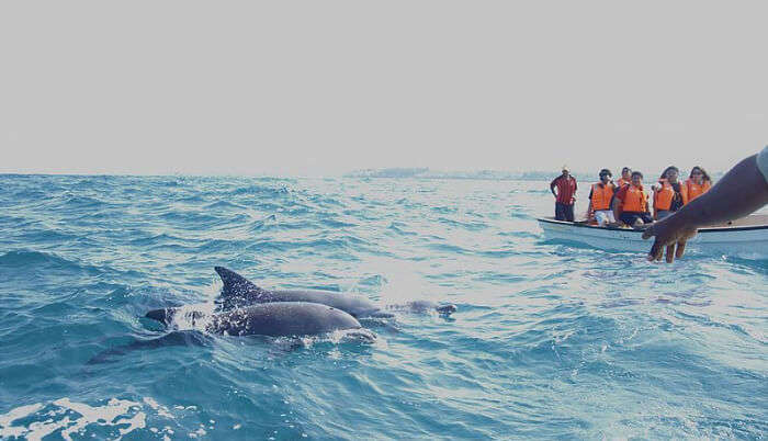 Indulge In Dolphin Watching