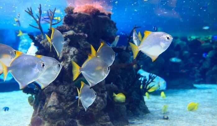 Exotic Aquarium Deep Coral Blue Animal Animals