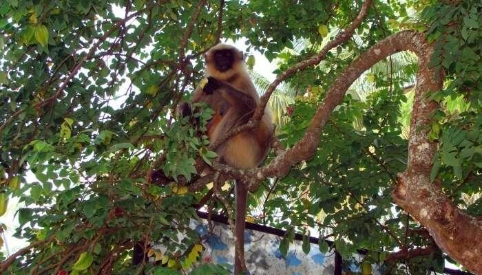 Lakhi Jungle In Bathinda