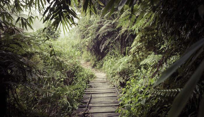 Rain Forest Reserve