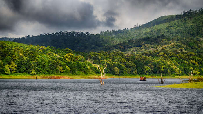 Thekkady In December cover