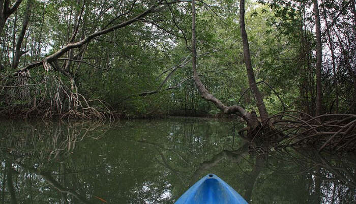 Try Cruising And Kayaking