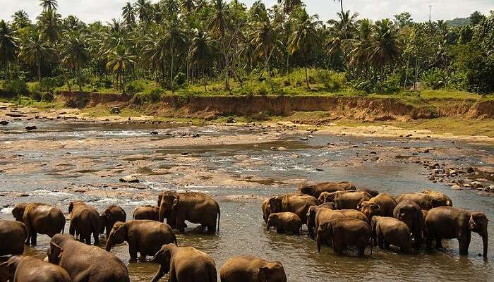 Udawalawe_National_Park._Sri_Lanka