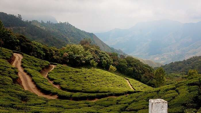 Highlands Ghats Munnar Tee Green Mountains India