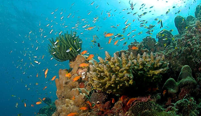 Witness The Reefs