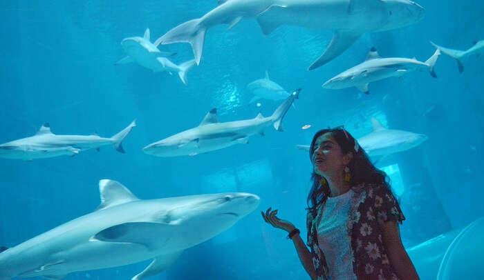 visited the S.E.A. Aquarium