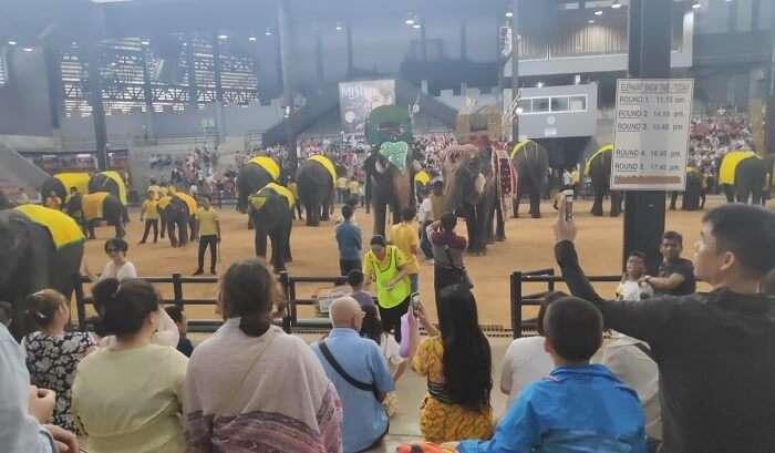 witness a fantastic Elephant Show