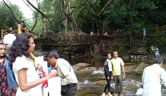 the single decker root bridge
