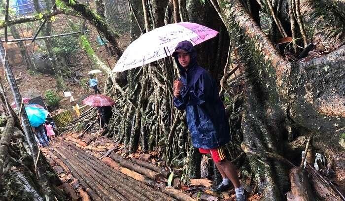 jingmahan root bridge