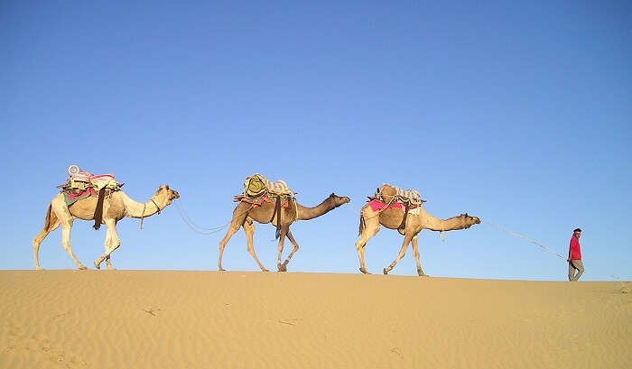 Camel safari ia an outstanding experience