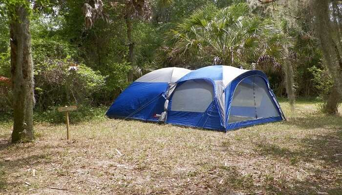 Camping In Dense Forest