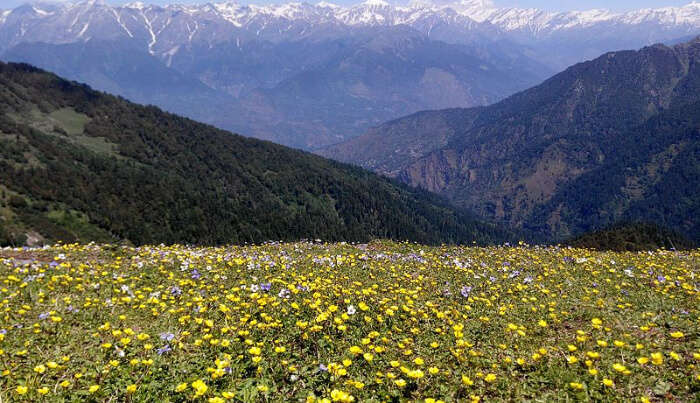 Flowers Valley