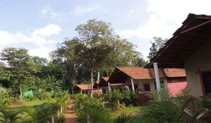 natural beauty of homestay