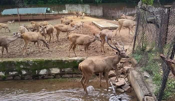nandan van zoo