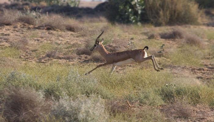 National park in Jaisalmer
