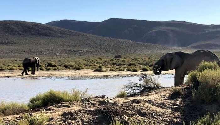 elephants around a river