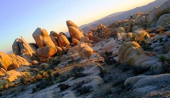 Beautiful deserts, flowers and plants, iconic Joshua trees