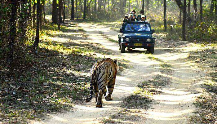 See animals in jeep safari