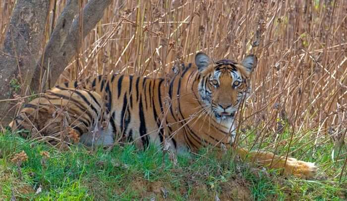 Kabini Wildlife Sanctuary is a gift to nature and animal lovers