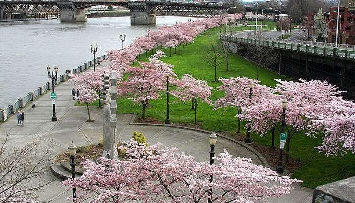 McCall Waterfront Park Portland