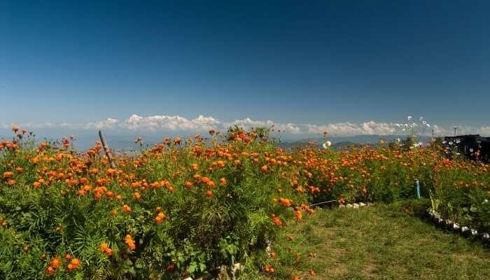 Mukteshwar View