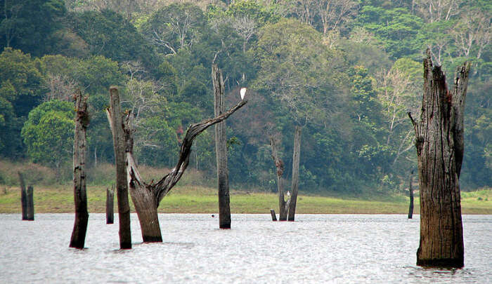 Natural Habitat of Animals