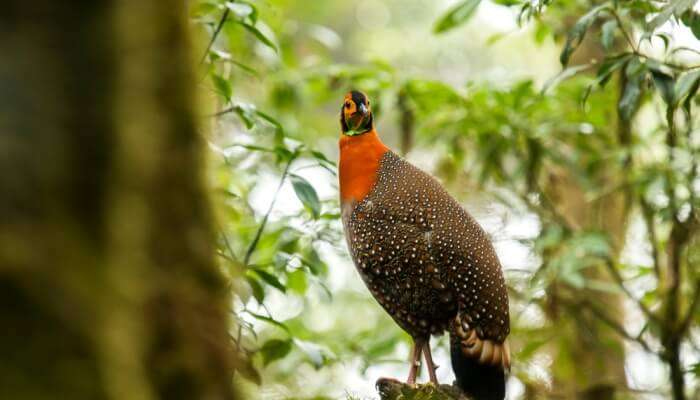 Wildlife In Nagaland