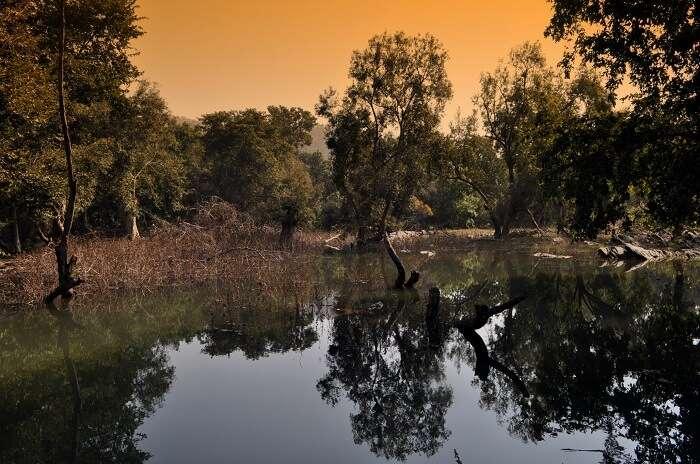 Wildlife sanctuaries in Chittorgarh