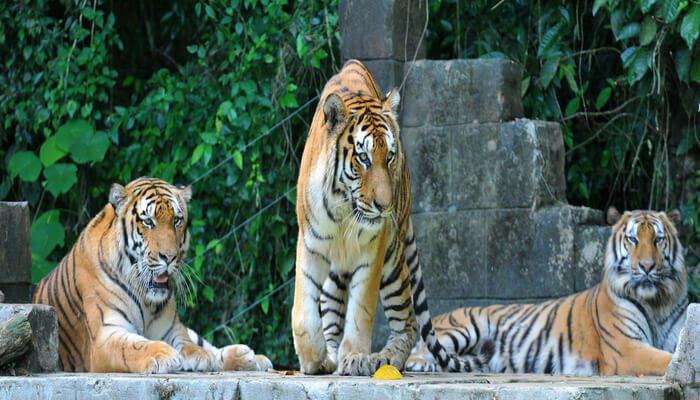 Tiger Valley