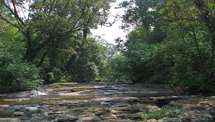 Trekking in Kerela