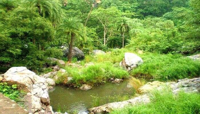 Trip to Sariska Tiger Reserve