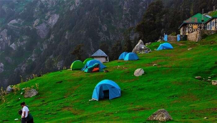 vast land of green grass