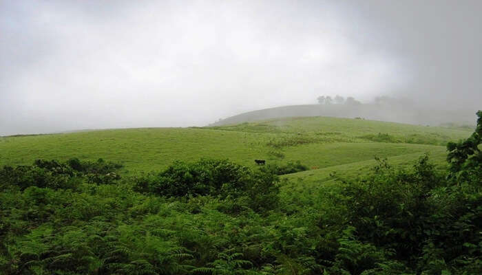 scenic view of vagamon
