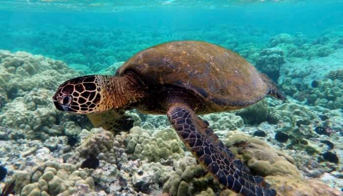 Turtle View