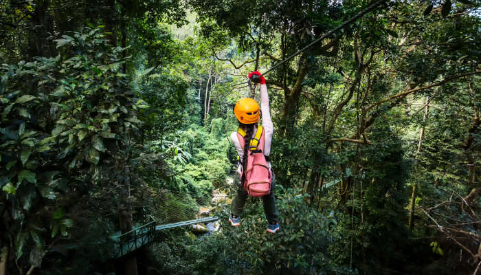Woman in a Jungle ZipLine
